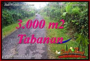 Beautiful PROPERTY 3,000 m2 LAND SALE IN Tabanan Selemadeg BALI
