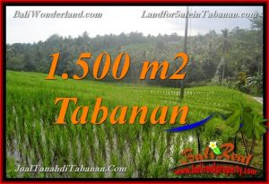 Affordable 1,500 m2 LAND FOR SALE IN TABANAN Selemadeg TJTB375