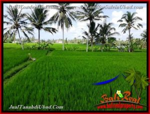 Magnificent LAND IN Ubud Pejeng BALI FOR SALE TJUB656