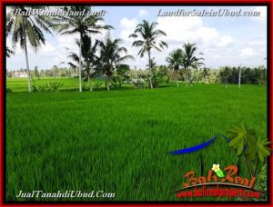 Magnificent LAND IN Ubud Pejeng BALI FOR SALE TJUB656