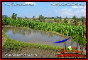 FOR SALE Exotic PROPERTY LAND IN UBUD TJUB659