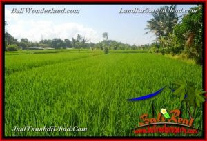 Affordable PROPERTY 3,500 m2 LAND SALE IN UBUD BALI TJUB660