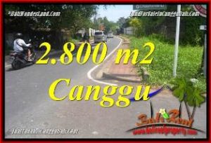 Beautiful PROPERTY 2,800 m2 LAND FOR SALE IN CANGGU BATU BOLONG  TJCG223