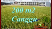Affordable 200 m2 LAND SALE IN CANGGU BALI TJCG229