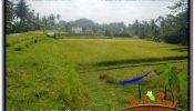 1,500 m2 LAND SALE IN UBUD BALI TJUB668
