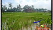 Exotic 1,100 m2 LAND IN SENTRAL UBUD FOR SALE TJUB670