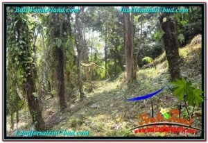FOR SALE LAND IN UBUD TJUB676