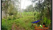 FOR SALE Affordable 12,100 m2 LAND IN UBUD PAYANGAN TJUB677