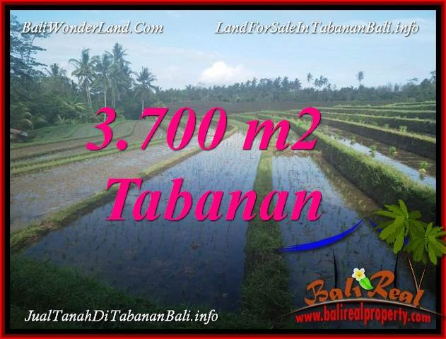Beautiful 3,700 m2 LAND FOR SALE IN TABANAN SELEMADEG BALI TJTB388