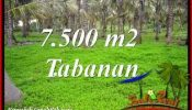 FOR SALE Beautiful 7,500 m2 LAND IN TABANAN SELEMADEG TJTB390