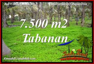 FOR SALE Magnificent PROPERTY 7,500 m2 LAND IN TABANAN SELEMADEG BALI TJTB390