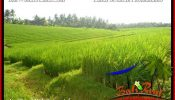 Exotic PROPERTY TABANAN BALI LAND FOR SALE TJTB394