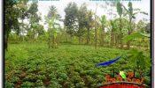UBUD BALI 10,500 m2 LAND FOR SALE TJUB681
