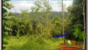 UBUD BALI 10,500 m2 LAND FOR SALE TJUB681