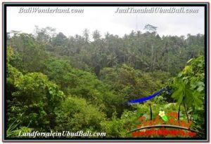 Beautiful PROPERTY 6,000 m2 LAND FOR SALE IN UBUD TEGALALANG BALI TJUB682