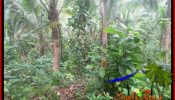 FOR SALE Cheap property 1,700 m2 LAND IN TABANAN SELEMADEG TJTB385