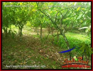 Exotic 3,700 m2 LAND FOR SALE IN TABANAN SELEMADEG BALI TJTB388
