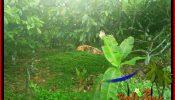 Affordable 3,000 m2 LAND IN TABANAN FOR SALE TJTB389