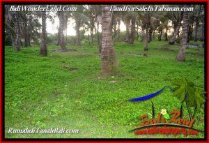 TABANAN SELEMADEG 7,500 m2 LAND FOR SALE TJTB390