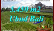 Affordable 5,450 m2 Land sale in Ubud Bali TJUB688