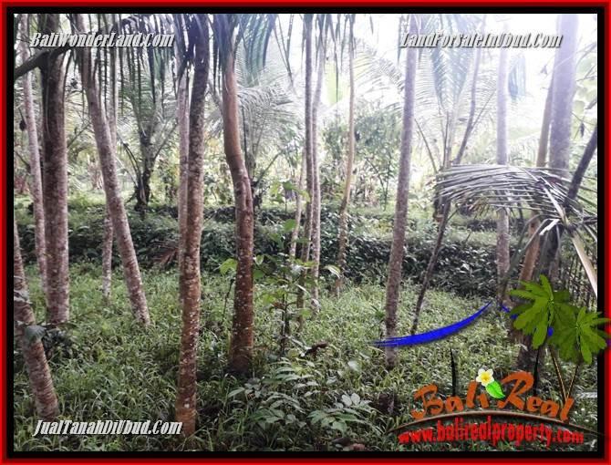 Affordable Property Ubud Pejeng 438 m2 Land for sale TJUB689