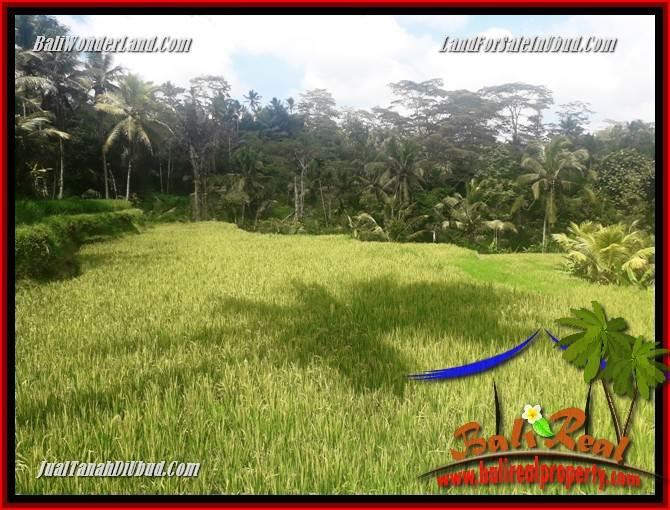Beautiful Ubud Land for sale TJUB690