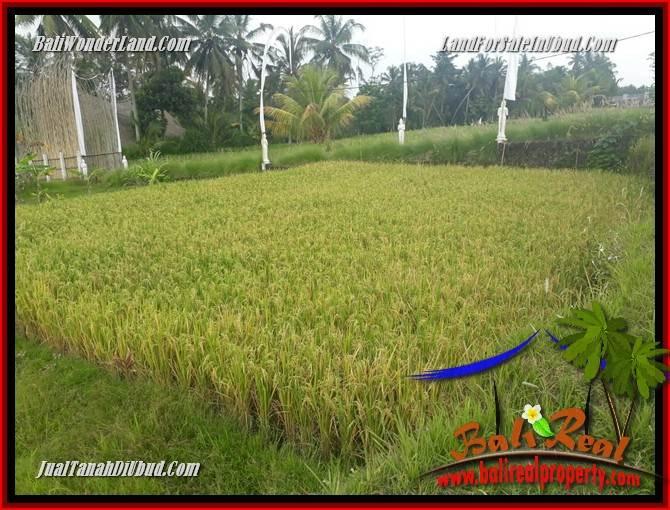 Magnificent 445 m2 Land in Ubud Pejeng for sale TJUB695