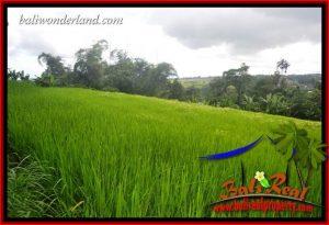 Affordable 6,500 m2 Land sale in Tabanan Bali TJTB416