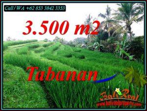 Magnificent SELEMADEG TIMUR TABANAN BALI 3,500 m2 LAND FOR SALE TJTB500