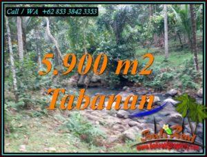Beautiful PROPERTY LAND SALE IN SELEMADEG TABANAN TJTB458