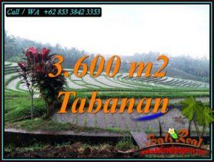 FOR SALE Affordable PROPERTY 3,600 m2 LAND IN SELEMADEG TABANAN BALI TJTB461